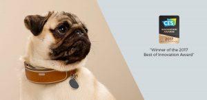 Link AKC Pet Tracking Collar