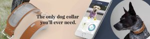 linkakc-dog-tracking-collar-direct-to-consumer