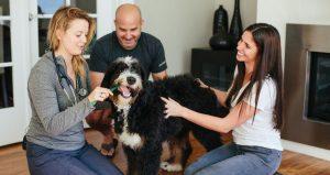 Fuzzy Veterinary Care