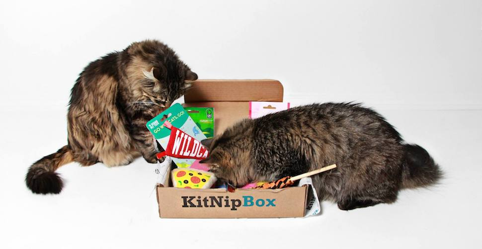KitNipBox Monthly Cat Box